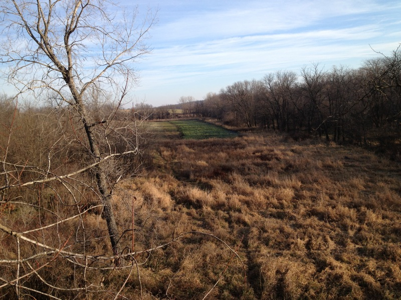 view from stand - distant food plot - Iowa