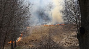 fire to improve wildlife habitat