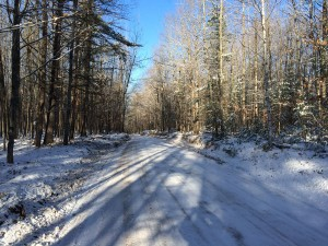 pigeon river forest after snow