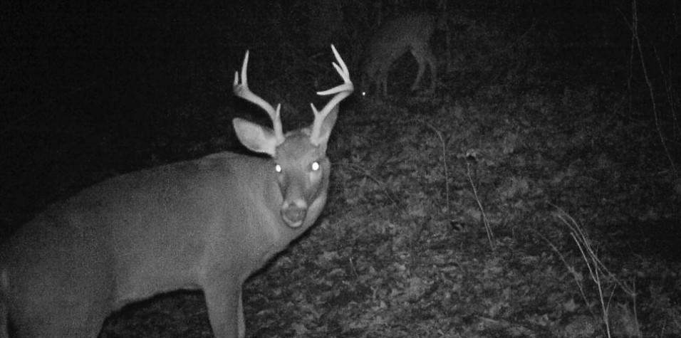 covert trail camera picture of 8 pointer Jacobs after