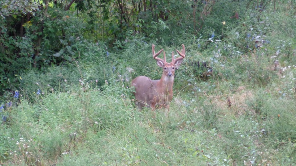 daylight deer movement is key to early archery success