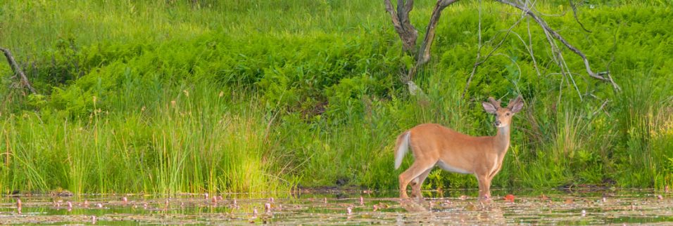 scouting for big bucks - May tips
