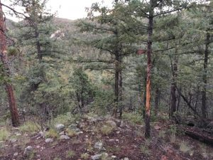 elk hunting Datil Mountains New Mexico