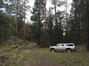 elk hunting new mexico Datil Mountains