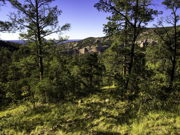 canyon view in New Mexico while elk hunting