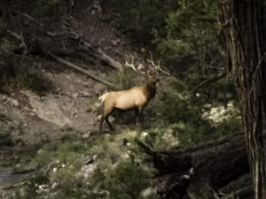 5x6 bull elk Jarrod passed day 3