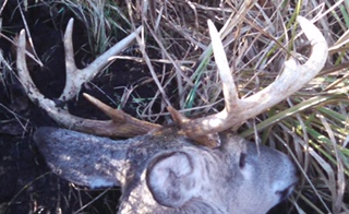 michigan public land deer hunting with onx maps