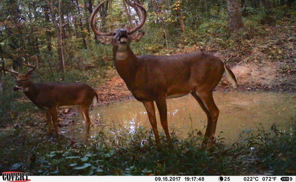 scouting bucks with trail cameras in their core areas